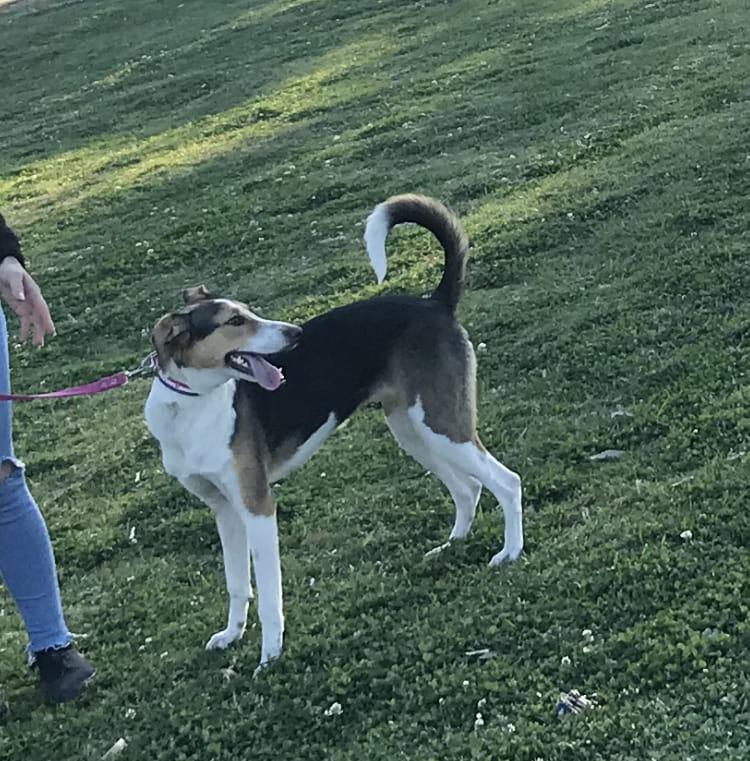Yerba, perra perdida en Santa Rosa