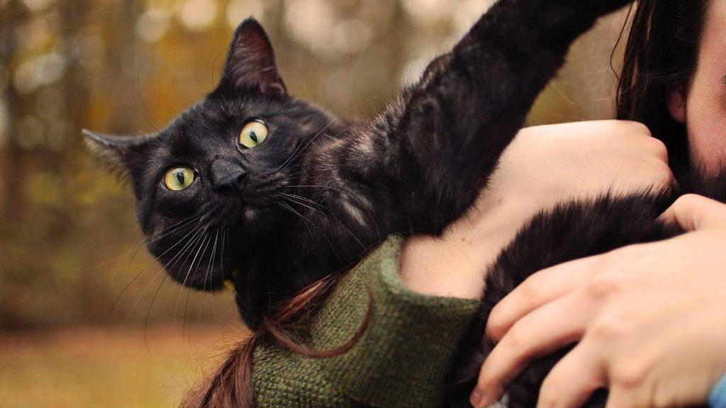 Cosas que jamás tienes que hacerle a tu gato