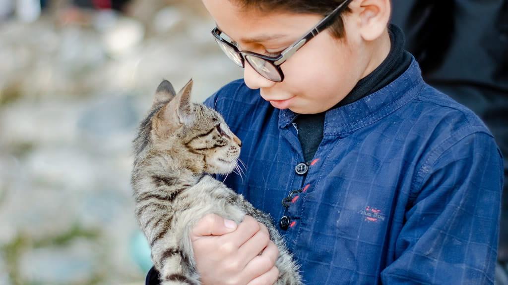 Respeto a los animales: La nueva asignatura que enseñarán algunos colegios de España