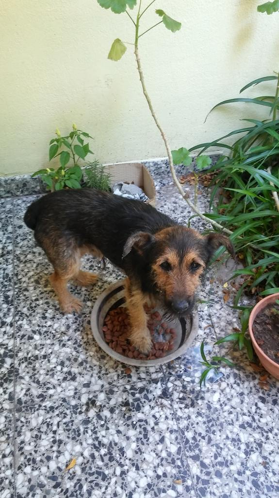 Perro encontrado en Santa Rosa