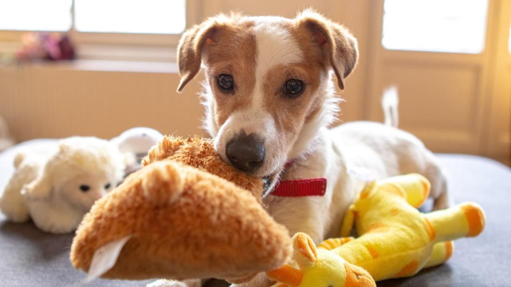 Beneficios de los juguetes para perros según Todoperros.org