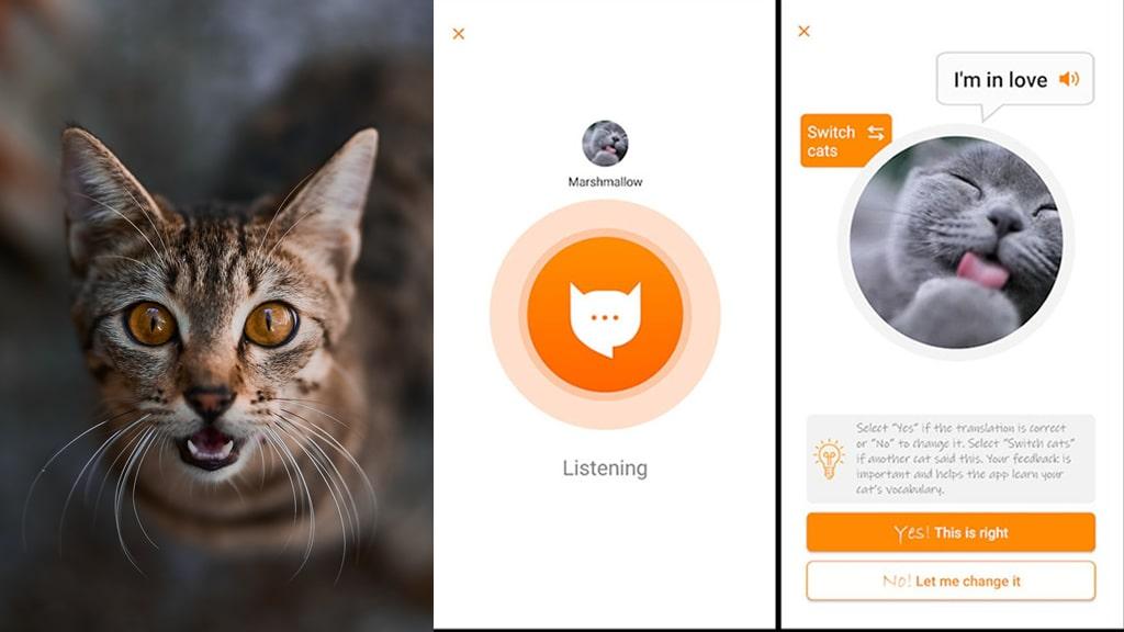 """Así funciona la aplicación que """"traduce"""" el maullido de los gatos"""