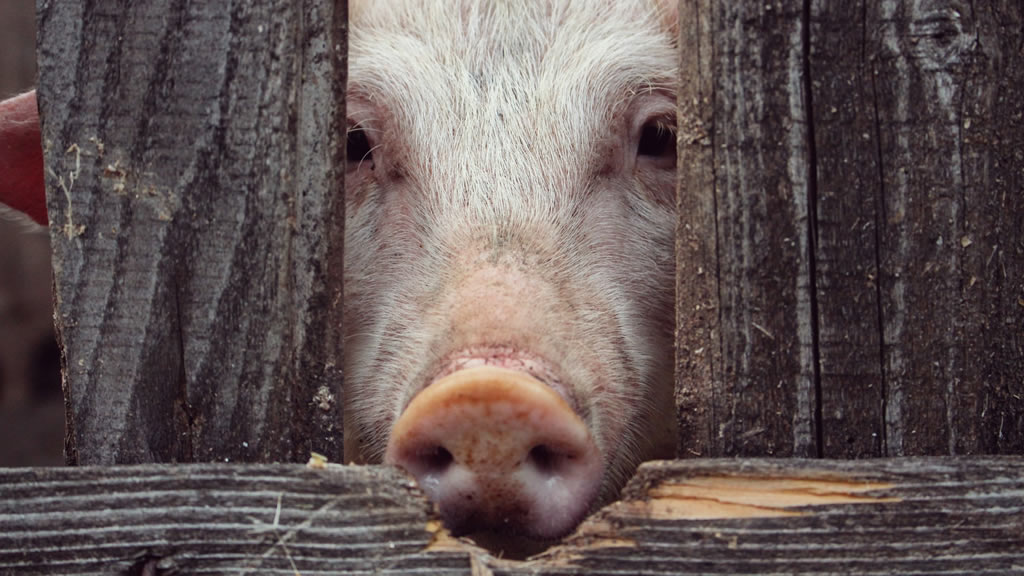 Razones por las que deberías reducir tu consumo de carne