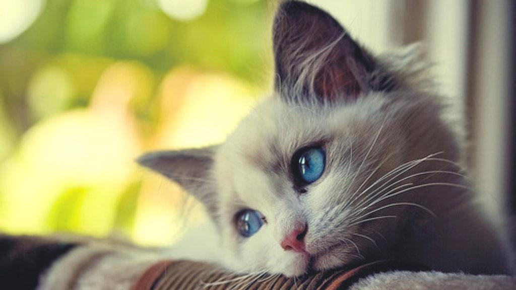 3 maneras en las que le rompes el corazón a tu gato y no sabías