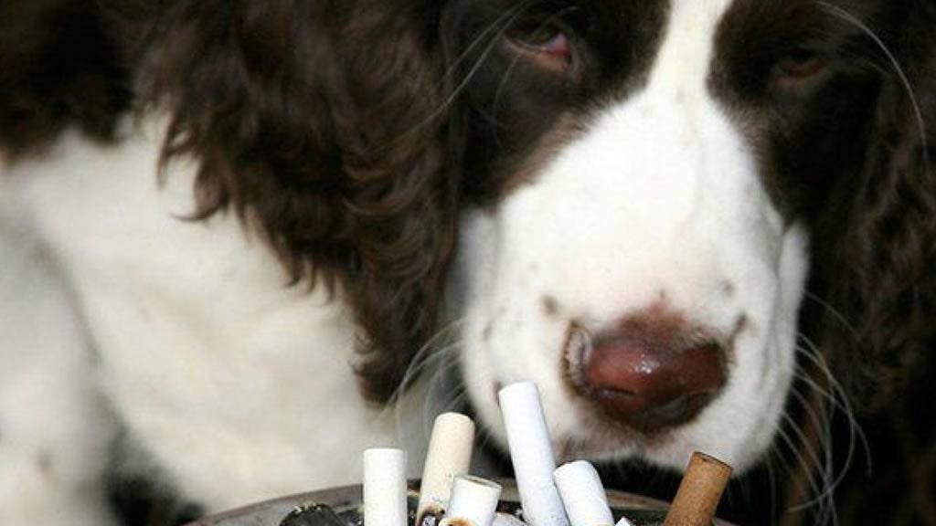 Por qué no deberías fumar cerca de mascotas