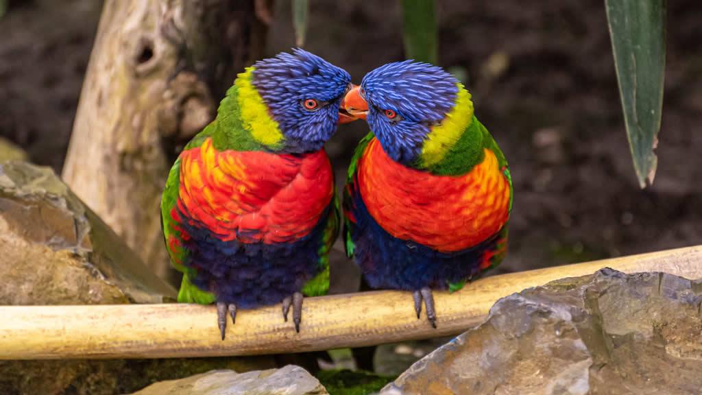 6 aves increíbles que sólo puedes encontrar en Australia