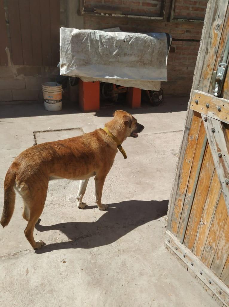 Oliva perra perdida en Santa Rosa