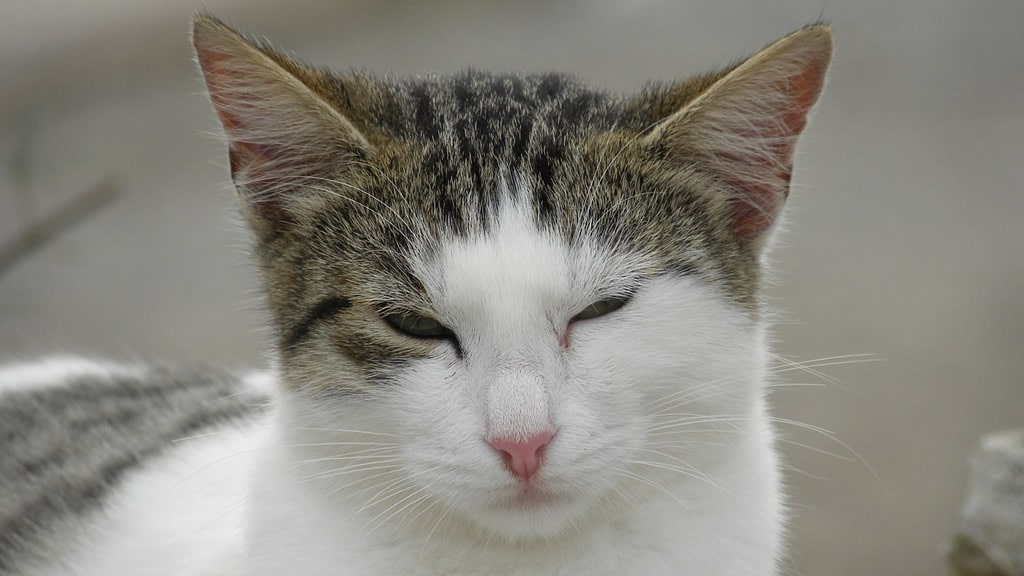 Estas son las 5 cosas que los gatos odian de los humanos