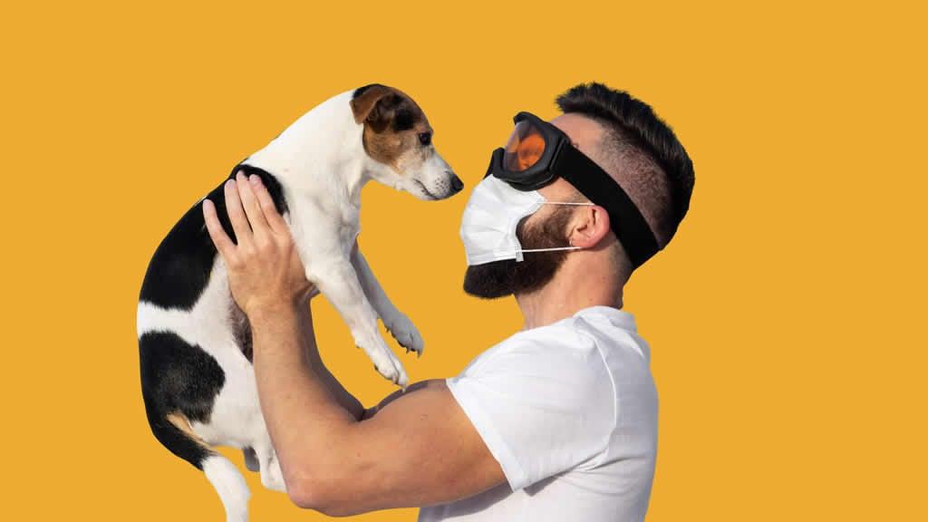 Un estudio sugiere que es común que las mascotas contraigan COVID-19 de dueños positivos