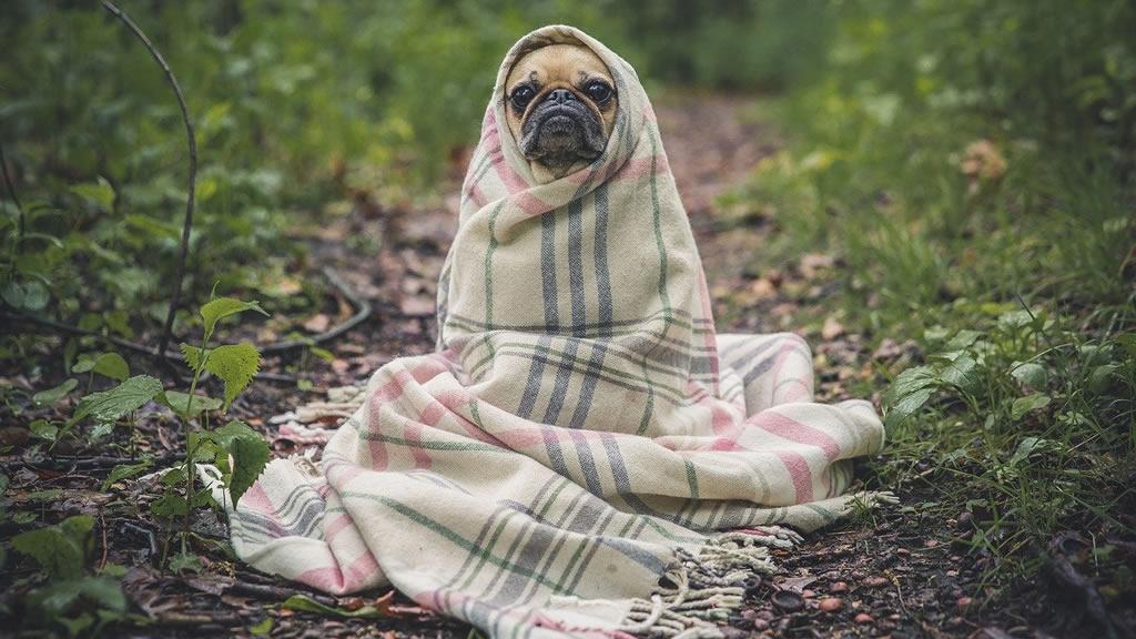 Mascotas: ¿sirve abrigar a los perros cuando hace mucho frío?